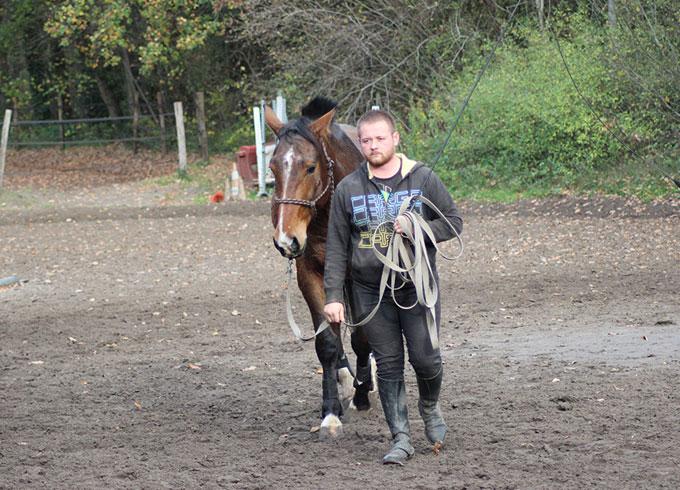 Débourrage jeune cheval à Compiègne