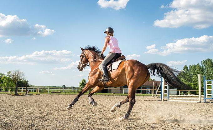 Entretien physique de votre cheval à La Croix Saint-Ouen