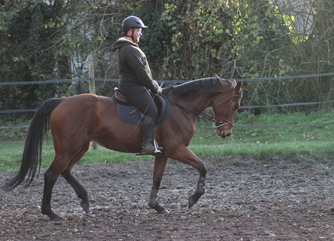 Xavier Delecluse, cavalier et moniteur d'équitation indépendant à Compiègne